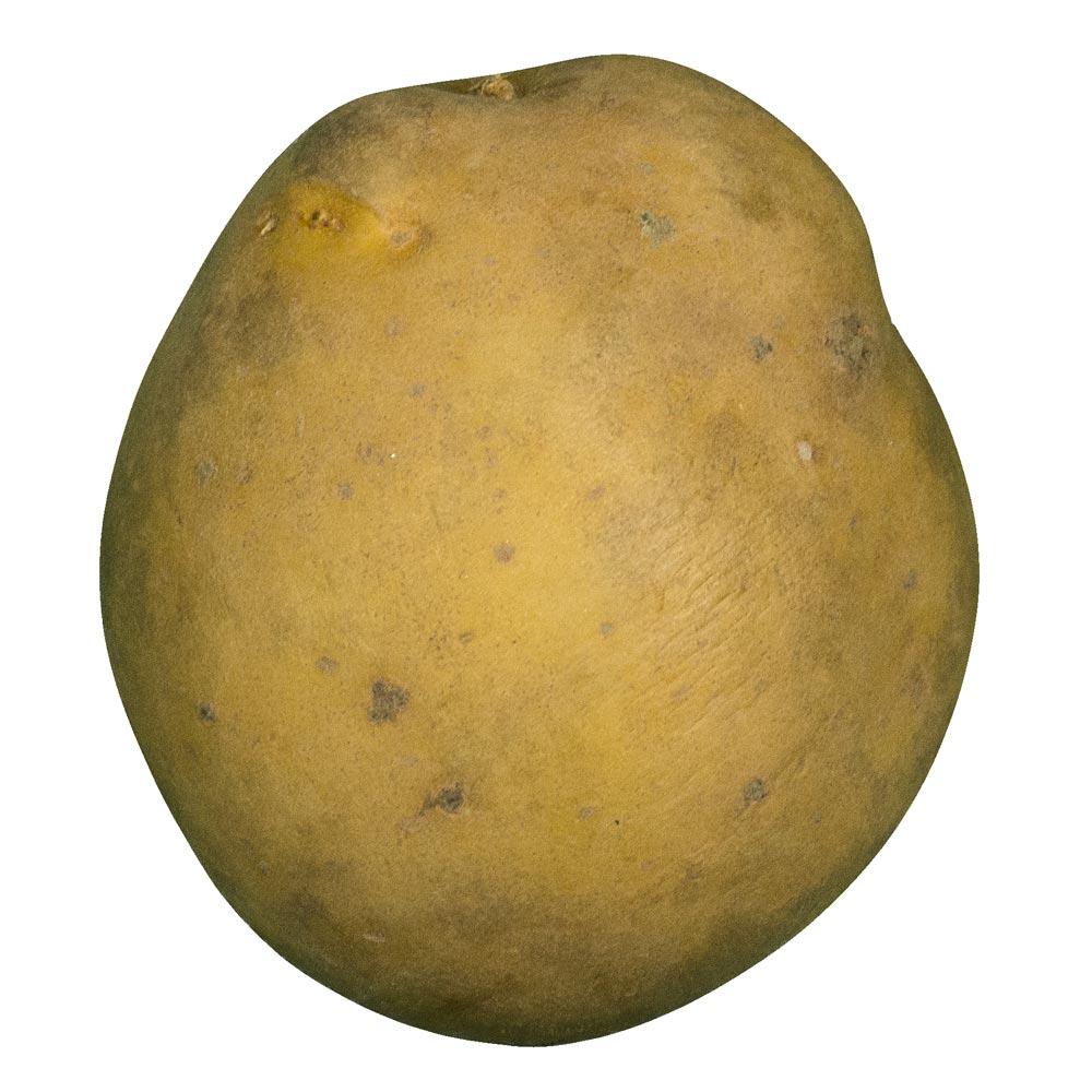 Frieslander aardappel van Boerderijshop.