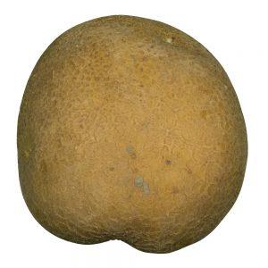 Doré aardappel van Boerderijshop.