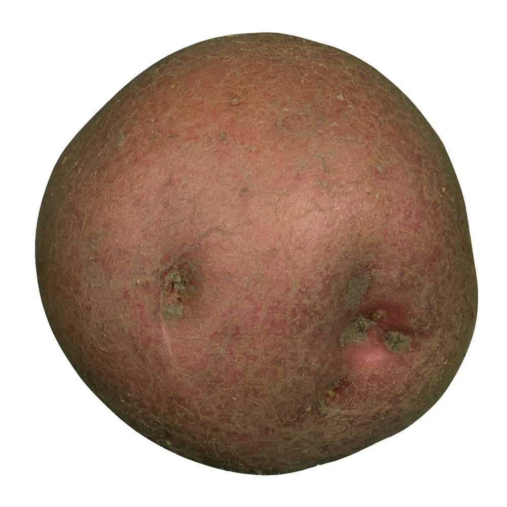 Irene aardappel van Boerderijshop.
